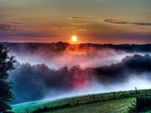 Sky Early Sunrise Mist Sun Morning Fields Trees Background Images